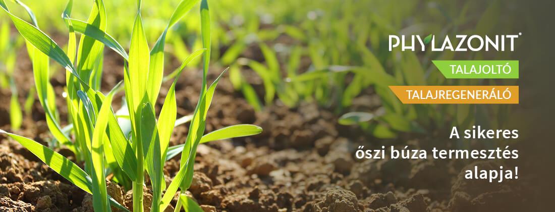 őszi búza termesztés