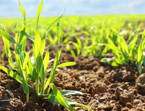 A Phylazonit technológia termésnövelő hatásáról