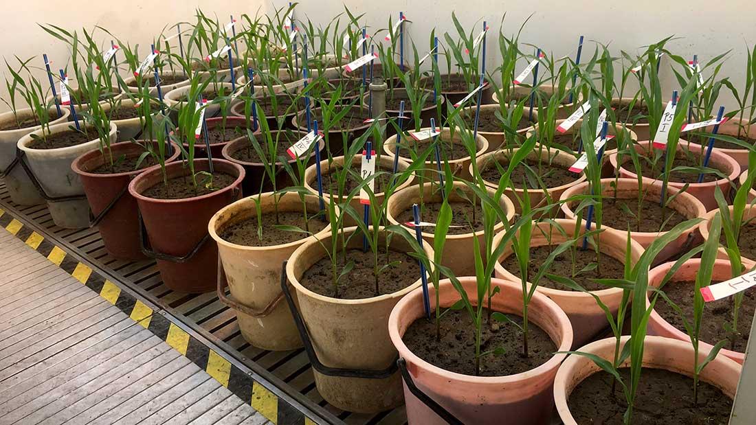 A-talajaink-termőképességével-bajok-vannak-(3)