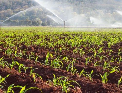 Növelik-e a rizoszféra mikroorganizmusok a kálium hozzáférhetőségét a mezőgazdasági talajokban?