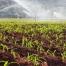 kálium hozzáférhetőség a mezőgazdasági talajokban