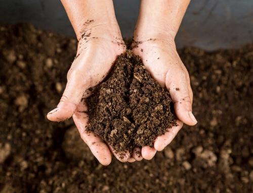 Valami ijesztő történik a talajjal a tudósok szerint, ezért figyelmeztetnek