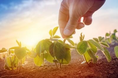 Phylazonit technológia a szója termesztésben