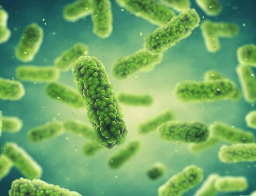 """A baktériumok """"ezer"""" arca"""